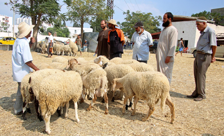 Aux abords d'un marché à Tunis, un homme vend des moutons pour la fête de l'Aïd el Kébir, le 11 septembre 2016.