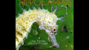 Couverture du livre de Patrick Louisy, «Hippocampes, une famille d'excentriques».