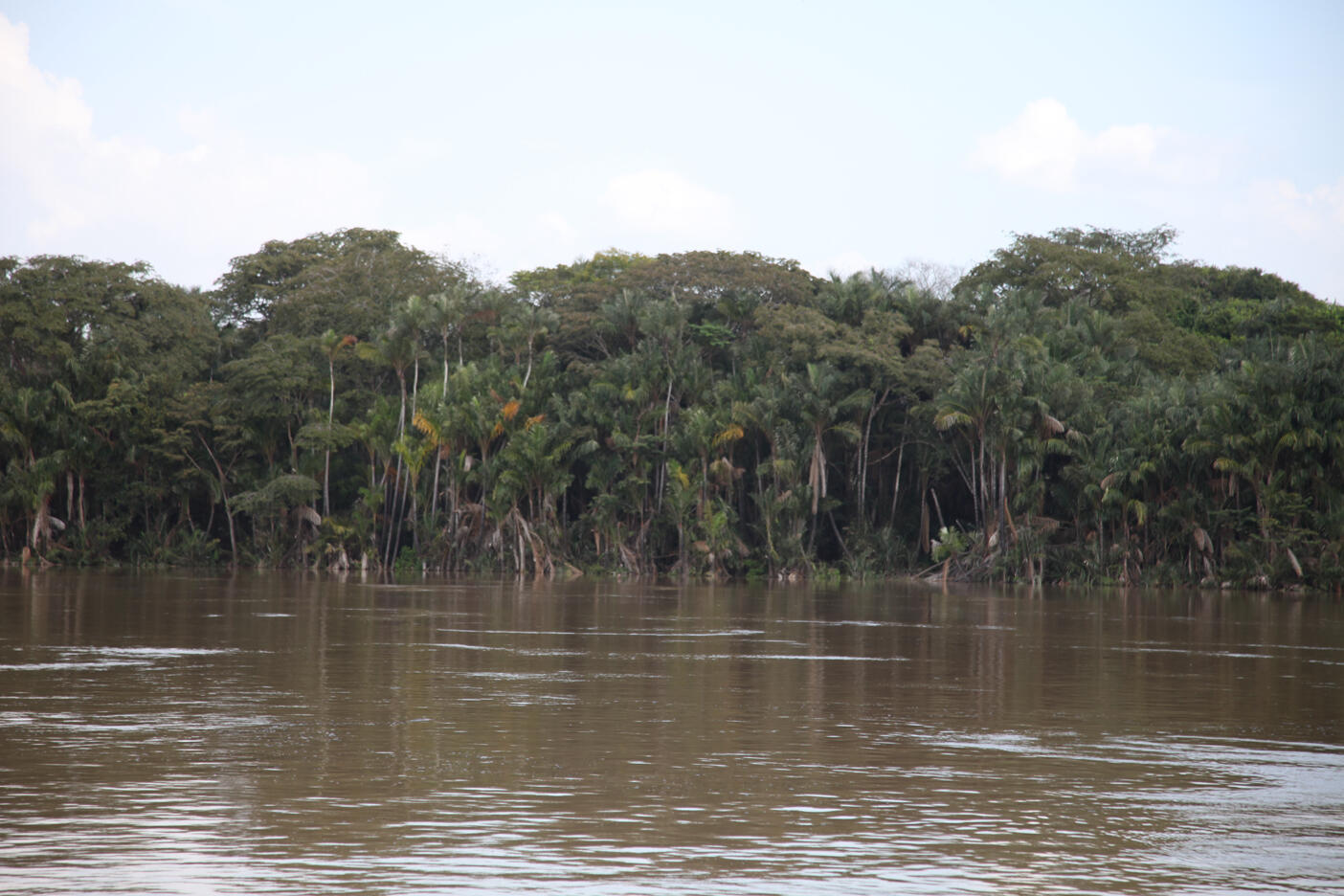 Berges des fleuves en Amazonie.