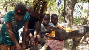 Récolte de noix de cajou le 21 avril 2012, près de Farim, au nord de la Guinée-Bissau.