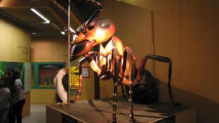 Pas besoin de loupe pour examiner l'anatomie des fourmis au Palais de la Découverte.