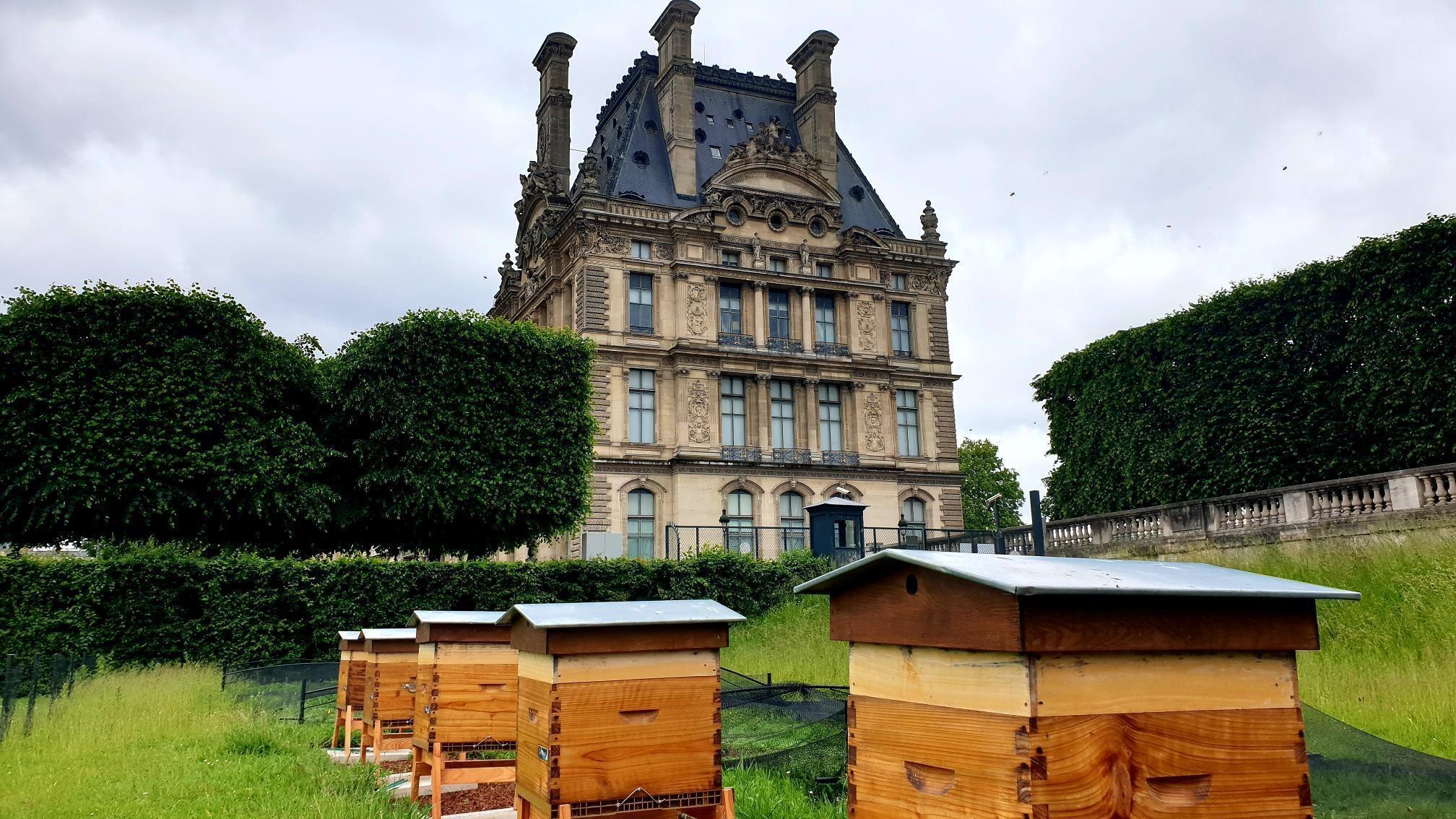 ruches - louvre - paris