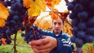 Nueve de cada diez botellas consumidas en los hogares franceses serían de vinos elaborados en Francia.
