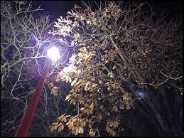 人工照明也會造成污染