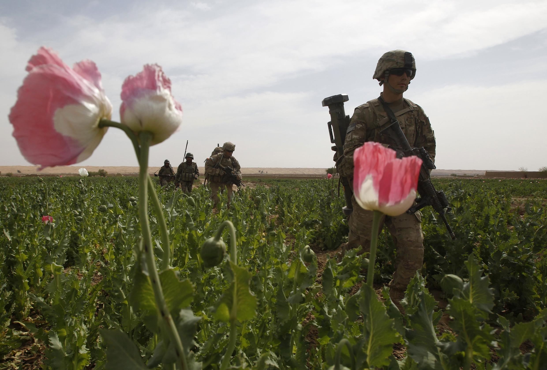 Des soldats américains traversent un champ de pavot au cours d'une mission conjointe avec l'armée afghane dans le district de Maiwand, province de Kandahar, le 7 avril 2012.