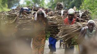 Un groupe d'habitantes de Bunagana ramène du bois de chauffe.