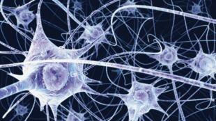 Sequências de neurônios reproduzem atividades diurnas para facilitar memorização durante a noite.