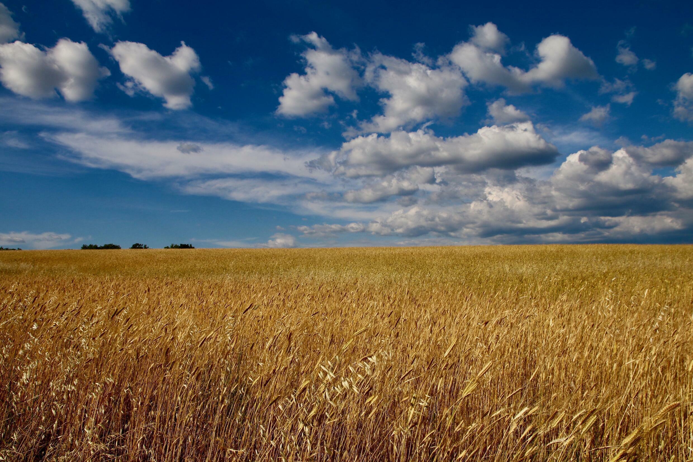 France - blé -