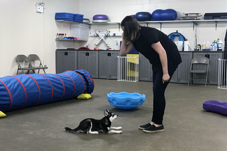 La emtrenadora de perros Hannah Richter trabaja con Lucy en el Beasty Feasty de Nueva York