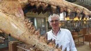 El palenteólogo Christian de Muizon y el fósil de Cynthiacetus peruvians que descubrió en Perú.