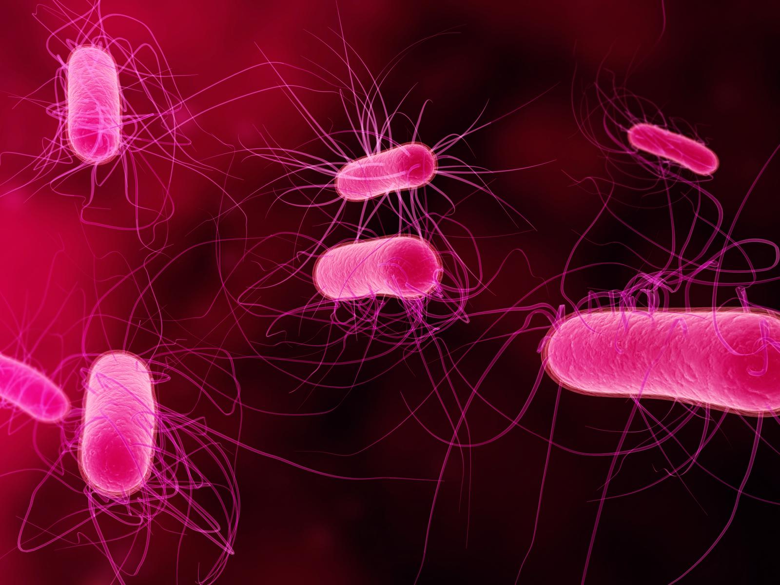 Bacterias en 3D.