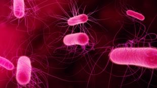 Bactéries en 3D.