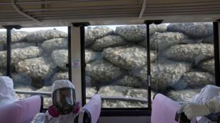 Nhân viên Tepco trên xe buýt, đằng sau là hàng rào bảo vệ bằng các túi đá, nằm giữa nhà máy Fukushima và biển, tháng 11/2011.