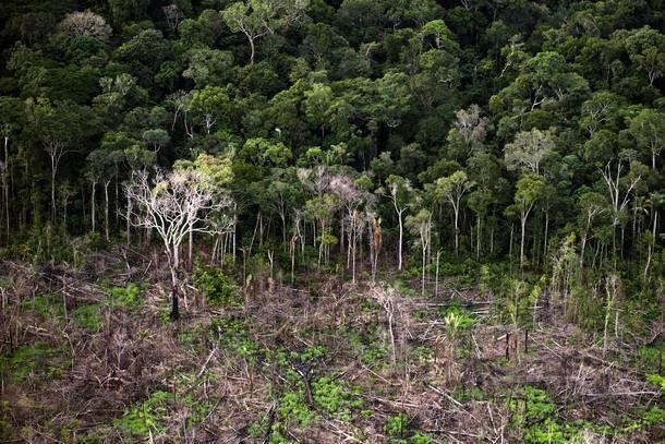 Desmatamento da Amazônia teve um aumento de 29% em apenas um ano.