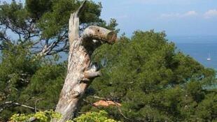 Flore de Porquerolle, dans le sud de la France, loin des lieux touristiques...