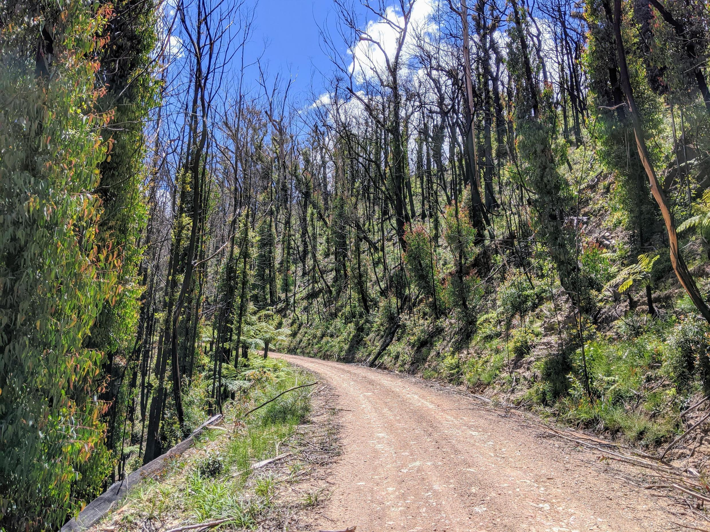 Fire scarred forest Bellinger Valley NSW, Australia.
