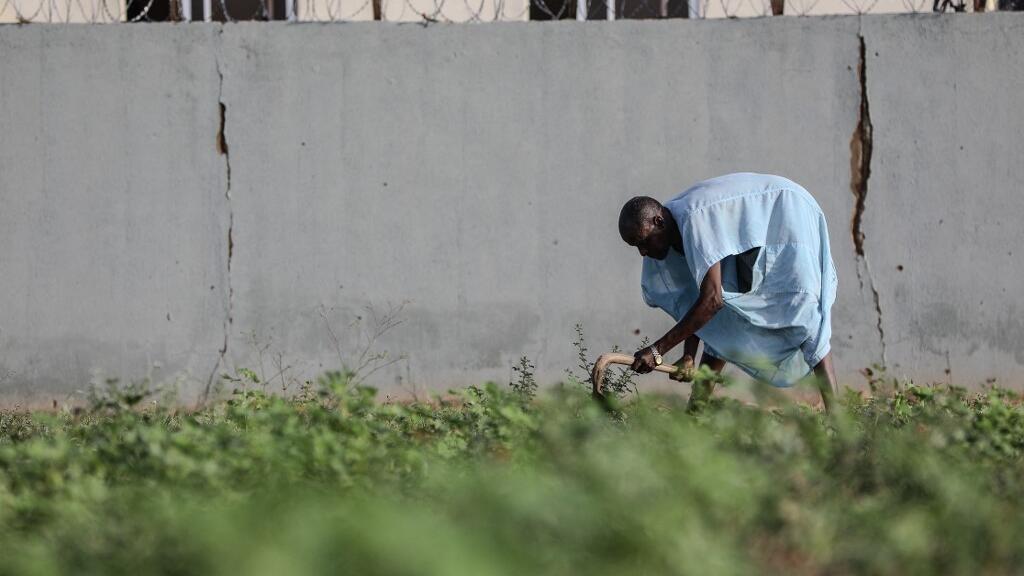 Nigeria : l'ICG fait le point sur le programme agropastoral du gouvernement