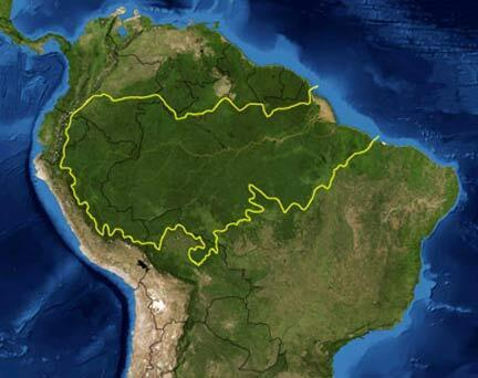 La forêt tropicale amazonienne. La ligne jaune indique la zone reconnue comme écorégion planétaire.