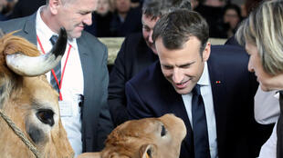 French President Emmanuel Macron visits the 55th International Agriculture Fair (Salon de l'Agriculture) next to an Aubrac breed cow and her calf in Paris, France, February 24, 2018.