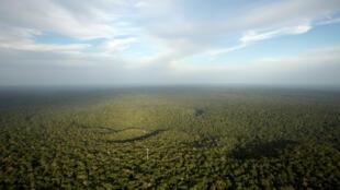 La forêt amazonienne, au Brésil, dans l'Etat d'Amazonas, le plus grand du pays. (Photo d'illustration).