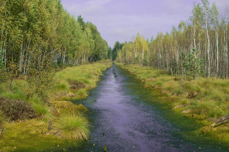 Всего болота занимают более 14% территории Беларуси