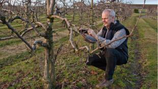 Dans le Kent, l'exploitant Charles Tassel cofondateur d'AgriChat. Charles Tassel qui photographie ses arbres fruitiers avant de twitter les photos.