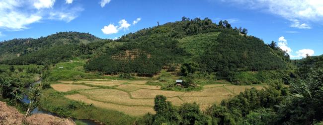 Ruộng lúa ở Muang Sing, Lào đang bị các đồn điền cao su lấn chiếm dần.
