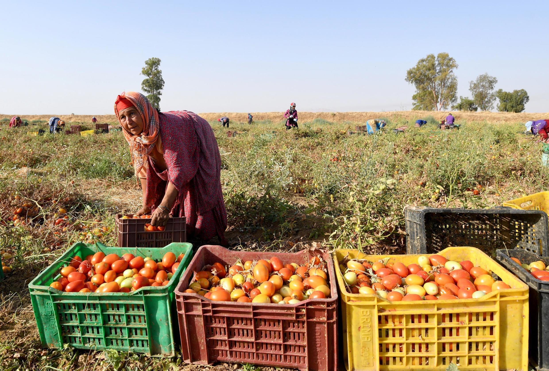 Une femme qui travaille dans le secteur agricole a un salaire moins élevé que celui d'un homme, et presque pas d'accès à la sécurité sociale.