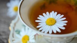 Las plantas medicinales forman parte de la naturopatía. En la imagen, una infusión de manzanilla.