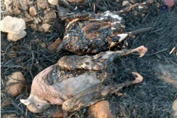 صدها گونۀ گیاهی و جانوری در شعله های آتش سوخته اند.