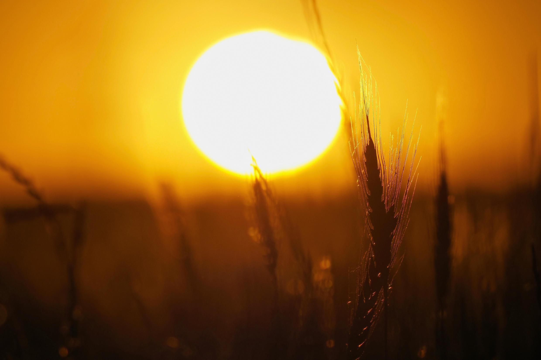 В Всемирной метеорологической организации предупредили о рекордно жарком лете на фоне пандемии коронавируса.