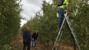 Denis Rabourdin (en bas à gauche) président de l'association Verger vivant de Lieusaint, et d'autres membres pendant une cueillette de pommes. L'association veut sauver ce verger qui doit être détruit puis remplacé par des bureaux et des entrepôts.