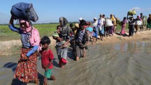Refugiados rohingya caminham em direção ao acampamento de Cox's Bazar (19/11/2017). avoir franchi la frontière à Anuman.