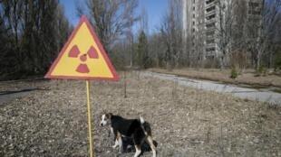 Du bois contaminé par les retombées de la catastrophe nucléaire de Tchernobyl (notre photo) a été utilisé dans certaines centrales thermiques lettones.