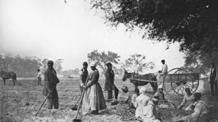 Esclaves noirs dans un champs de patates douces, environ 1862.