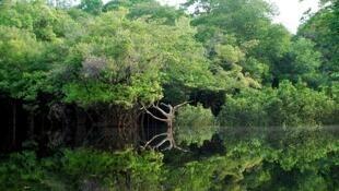 Iniciativas inovadoras de proteção das florestas ganham impulso na COP22.