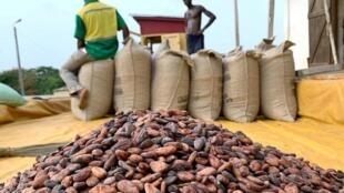 Des fèves de cacao dans un entrepôt dans le village d'Atroni, au Ghana.