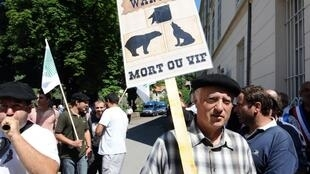 French farmers protest at the re introduction of bears and wolves