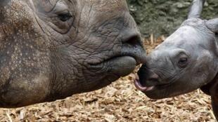 Pour la première fois depuis longtemps, aucun rhinocéros n'a été abattu au Kenya en 2020.