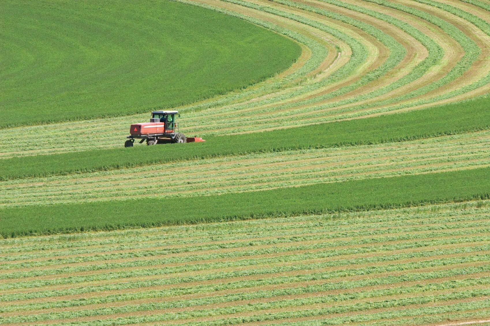 Champs de la société Monsanto