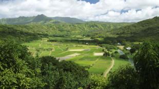 La vallée de Hanalei, avec des champs de taro, à Hawaï.