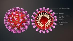 800px-3D_medical_animation_coronavirus_structure