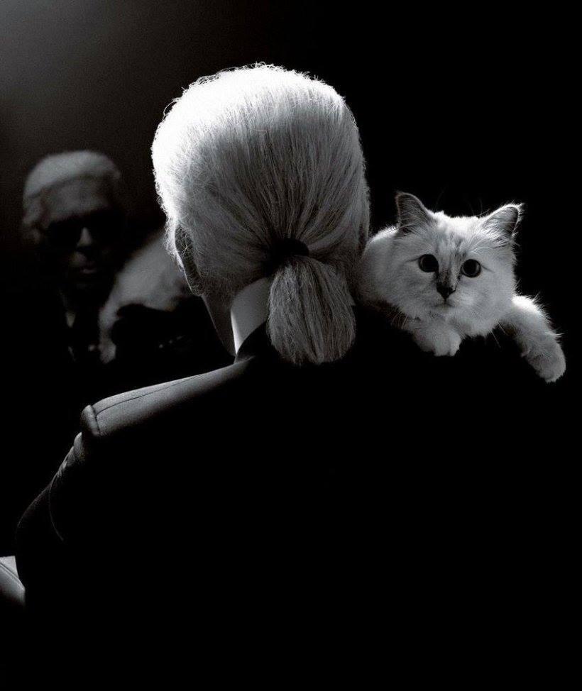 Karl Lagerfeld com Choupette