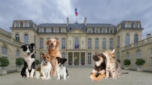 Depuis Valéry Giscard d'Estaing, il y a toujours au moins un chien à l'Elysée.