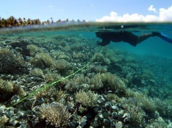 Atoll : Nơi bảo tồn vô giá các hệ sinh thái. Trong ảnh một hồ nằm trong đảo san hô Napuka, một atoll thuộc quần đảo Tuamotu - Polynésie (Pháp). Ảnh Viện nghiên cứu Phát triển Pháp - IRD.