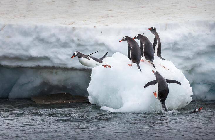 Аргентинские метеорологи зафиксировали температурный рекорд на севере Антарктиды