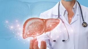 Avec le temps, en fonction de notre alimentation et notre hygiène de vie, le foie peut se fatiguer.