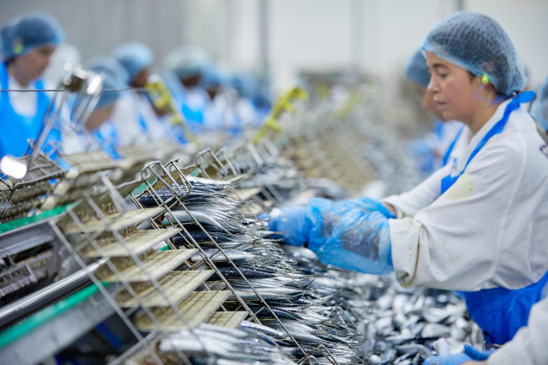 En la fábrica de sardinas en lata Chanterelle, practicamente todo se hace manuelmente.