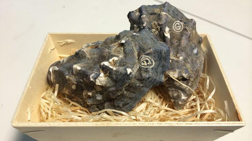 An engraved Gillardeau oyster
