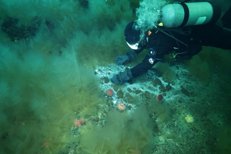 Микробиолог из Орегонского университета Эндрю Тербер изучает микробный мат в районе утечки метана в море Росса, 2016 г.